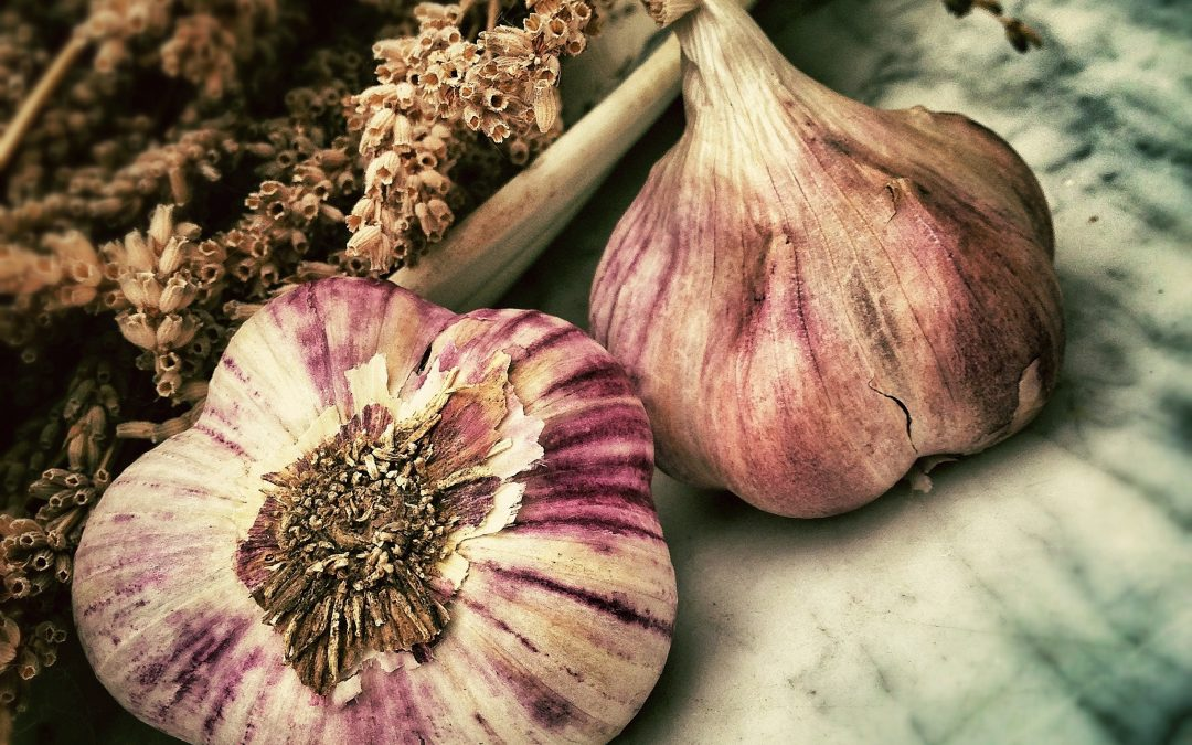 Fall Focus: Garlic for your Lungs